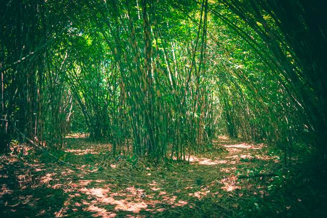 The atmosphere in the bamboo forest is somewhat spooky...